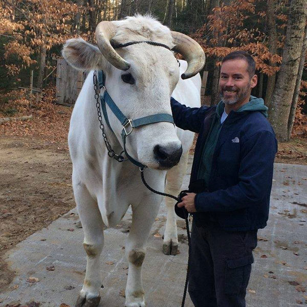 Patrick next to a cow